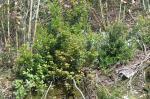 Vegetação nativa depois de removidas as invasoras mais próximas