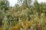 Panorama caótico de vegetação invasora misturada com espécies nativas