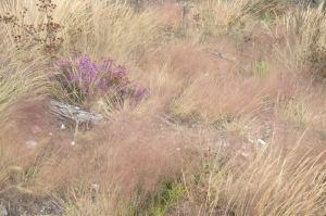 Vegetação herbácea com predominância de Agrostis