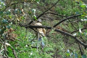 Árvores queimadas dificultando a progressão no terreno