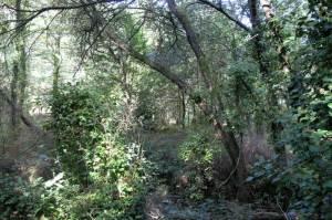 Carvalhal caducifólio junto ao Ribeiro de Belazaima