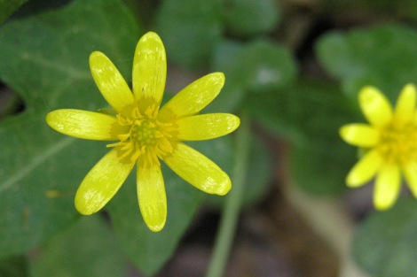 Flor não identificada