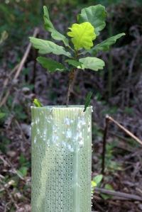Tubo abocanhado mas não derrubado; planta intacta