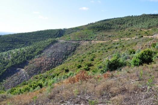 Entre os vales 3 e 4: uma paisagem em recuperação