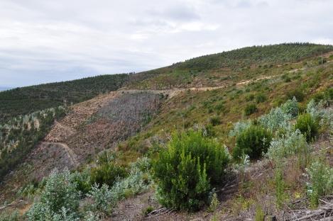 Aspecto actualizado da área entre os vales 4a e 4b