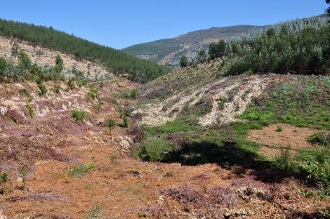 Panorama do Ribeiro de Belazaima após a intervenção inicial