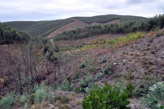 O vale nº 6 e, em 2º plano, as áreas adquiridas pela Quercus