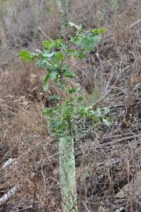 As árvores plantadas resistiram bastante bem ao Verão