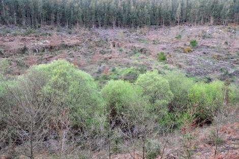 Carvalhal da Ribeira do Tojo, em propriedades adquiridas pela Quercus