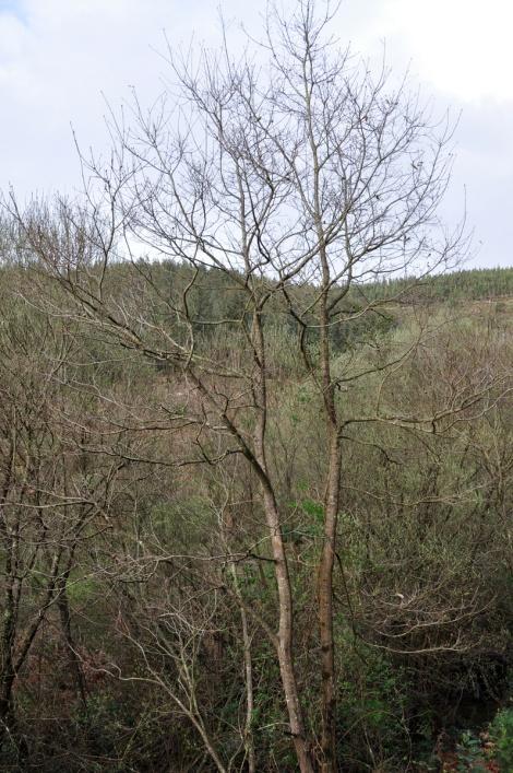 Última árvore cuidada