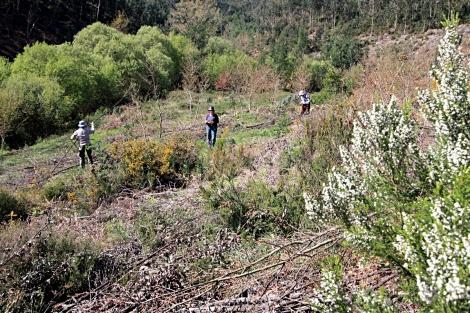 Voluntários arrumando lenha