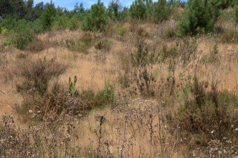 Vegetação herbácea em tonalidades de Verão