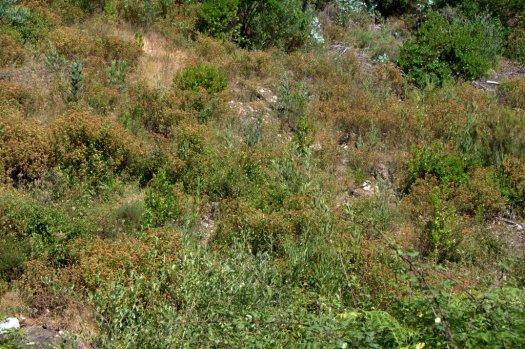 Faixa de conservação em torno do vale nº 3