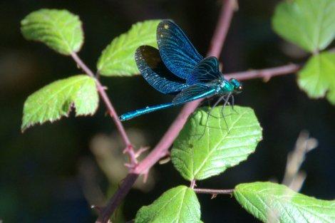 É sempre bom observar uma libelinha