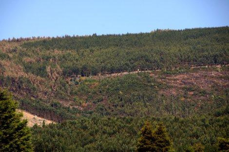 Foto tirada já a 1 de Setembro da área de conservação do vale nº 1