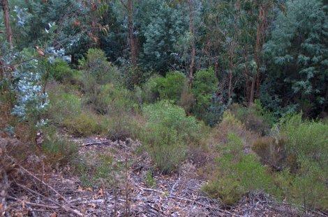 Encosta ribeirinha com restos de vegetação espontânea
