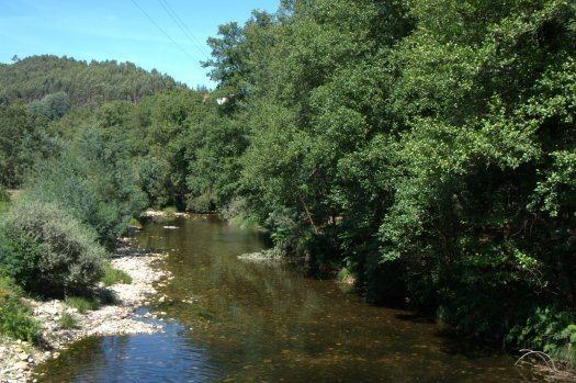 Rio Águeda; margem direita, bem conservada, e esquerda, mal, num terreno plantado com folhosas ornamentais