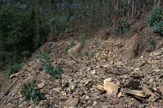 Mobilização de solo muito agressiva: é assim que queremos a nossa paisagem?