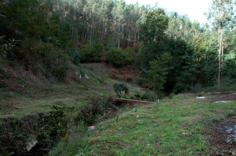 Já no terreno, os tubos de protecção das árvores semeadas