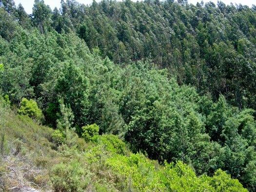 Foto da cabeceira do vale nº 5 tirada na Primavera de 2003