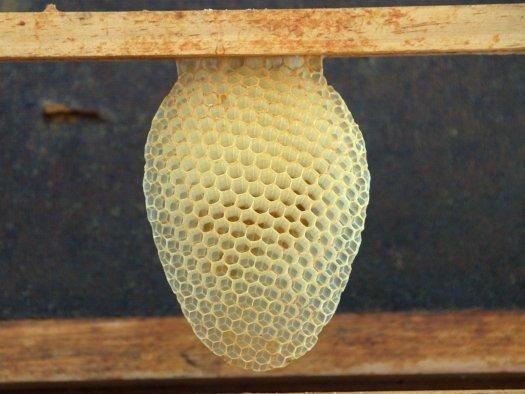Favo de mel natural