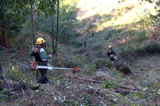 Uns dias antes da jornada, uma equipa da AFBV triturou o matagal e o silvado