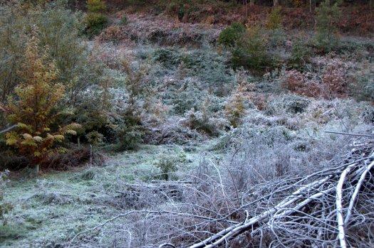 A cor branca da geada dominava o vale
