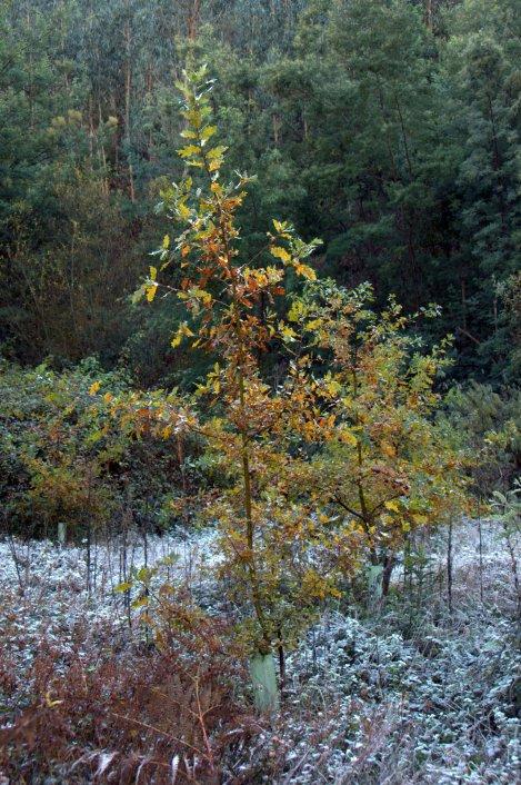 As árvores, plantadas no vale em 2010, apresentavam uma bonita tonalidade outonal