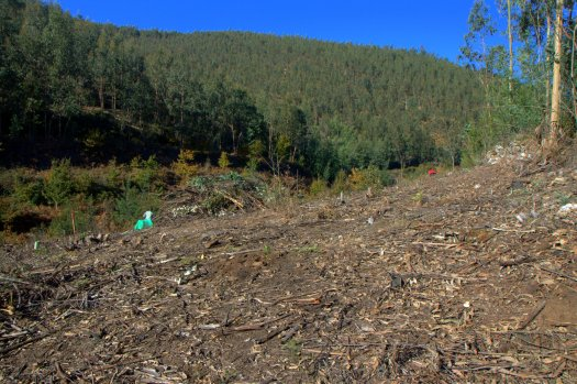 Pelo final da manhã, já a geada tinha desaparecido do morro e a plantação estava concluída