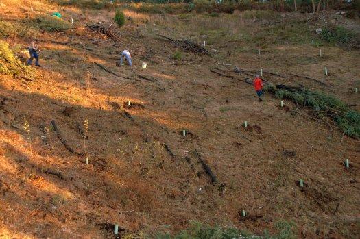 Área plantada, já os trabalhos iam avançados