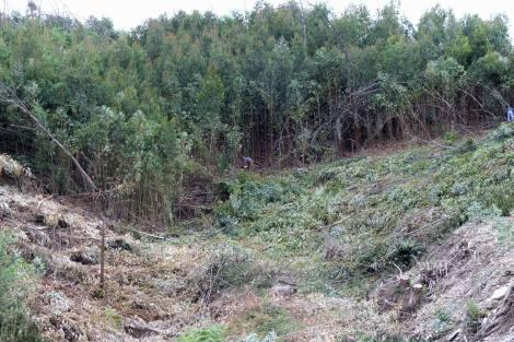 Em Julho de 2008, equipa no terreno cortando eucaliptos e mimosas no vale