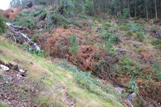 Perspectiva da área plantada, abaixo dos afloramentos