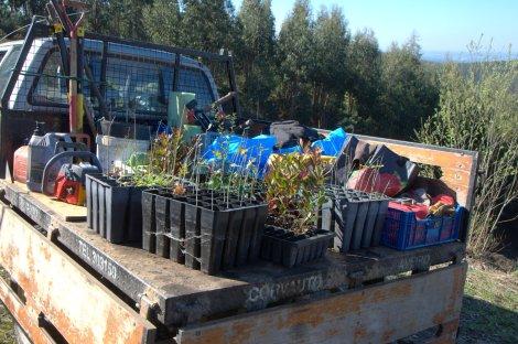 Carga de plantas e equipamento, ao chegar ao terreno