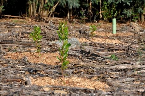 Vista geral; neste caso trata-se de um morro seco e com quase nenhuma vegetação espontânea