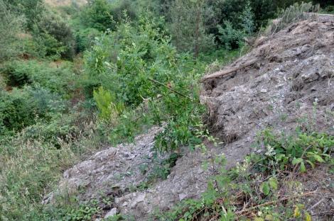 Árvore (a alguns metros do caminho) tombada pelo aterro lançado pela encosta