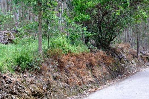 Talude com vegetação espontânea pulverizado (Belazaima - Feridouro)