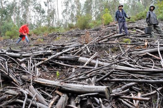 A chuva não ajudou, e a muita madeira queimada em 2005 também não