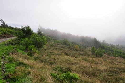 A neblina em movimento ascendente