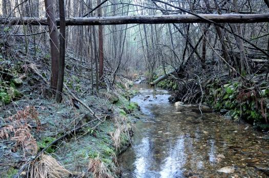 Troço do ribeiro (desesperadamente) à espera de intervenção