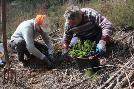 Plantando um medronheiro