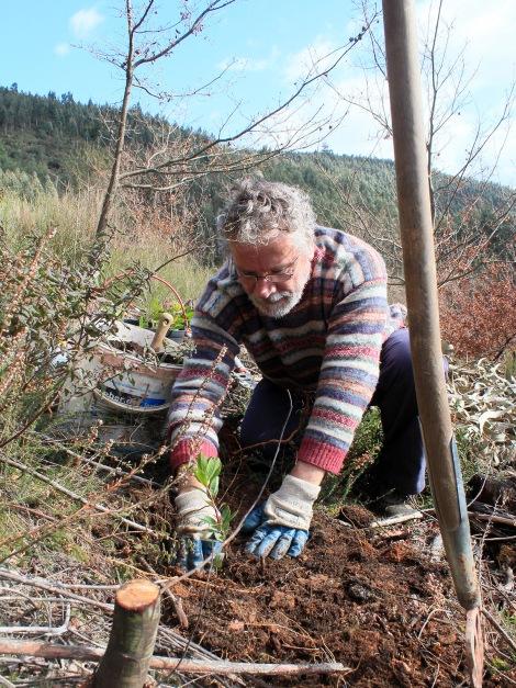 Plantando outro medronheiro