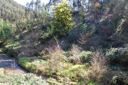 Vista mais geral da encosta a sul do ribeiro