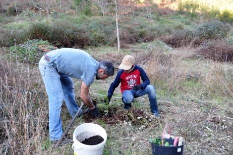 Plantação de medronheiros