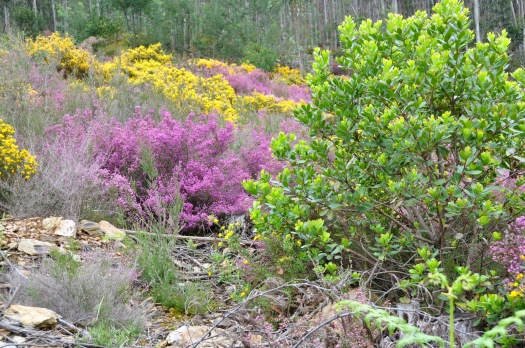 Matagal e medronheiro plantado em 2009