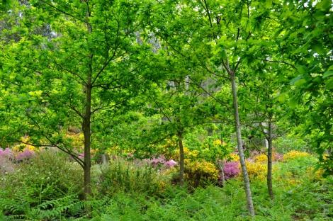 Outro conjunto de carvalhos com o matagal em fundo