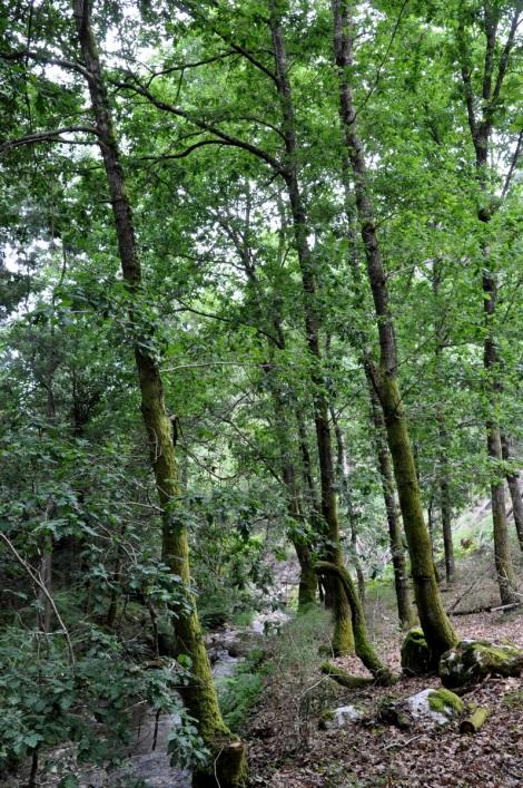 Bosque ribeirinho