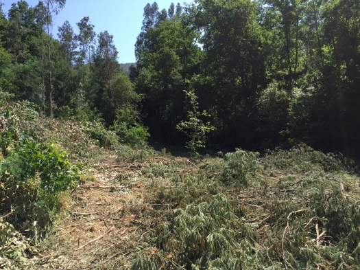 Antigas terras agrícolas