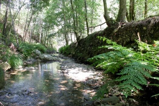 As águas do ribeiro estavam convidativas...