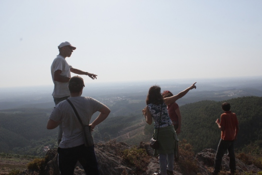 Observação da paisagem e de cravinas-bravas