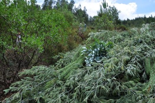 A vegetação cortada foi devidamente arrumada, para não estorvar trabalhos posteriores